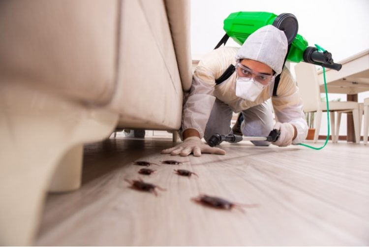 pest control worker and cockroaches