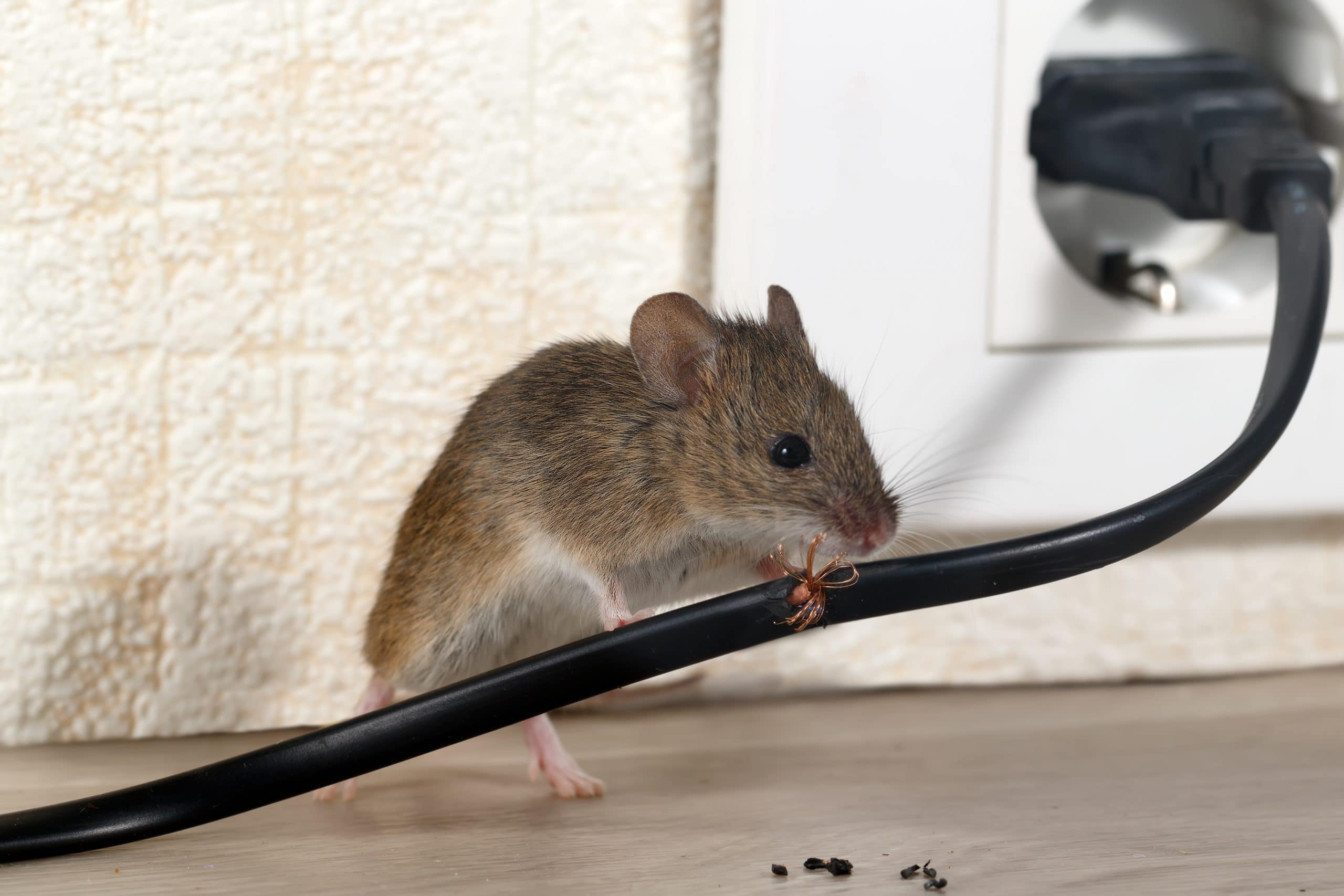 grey mice on the cable