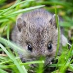 mouse in grass