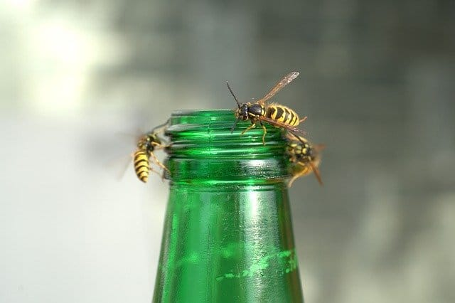 what do wasps hate bottle
