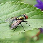 fly control london garden