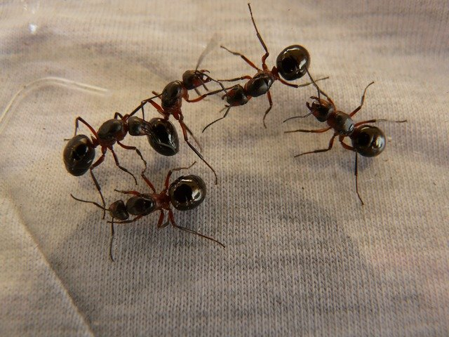 mind blowing facts about ants