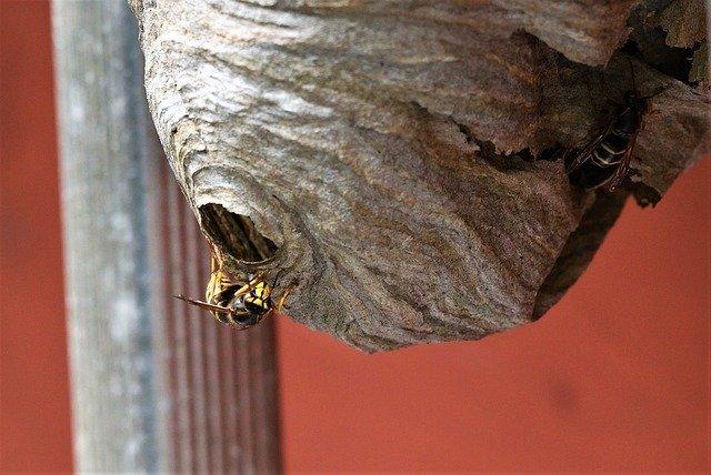 a wasps nest