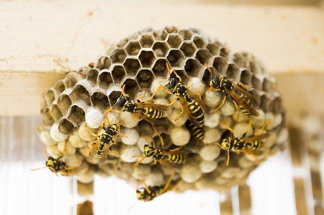 stop wasps nesting