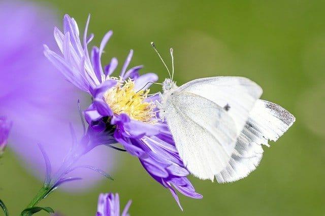 butterfly in london garden