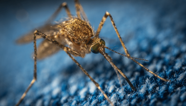 Pest Control Services in Alexandra Palace