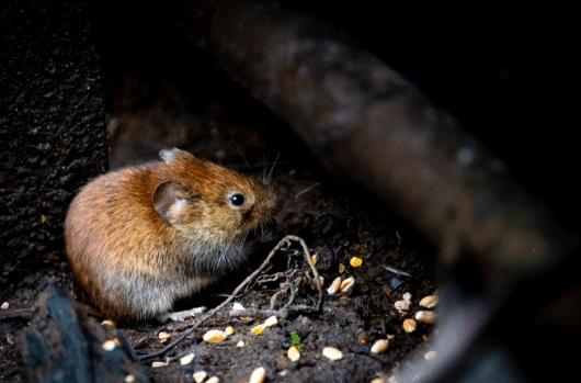 Pest Control in Bankside