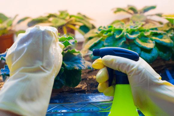 Advanced pest control methods
