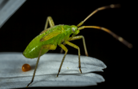 How Pests are harmful to humans