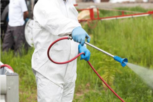 Pest Control Cann Hall