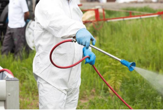 Pest Control Ealing