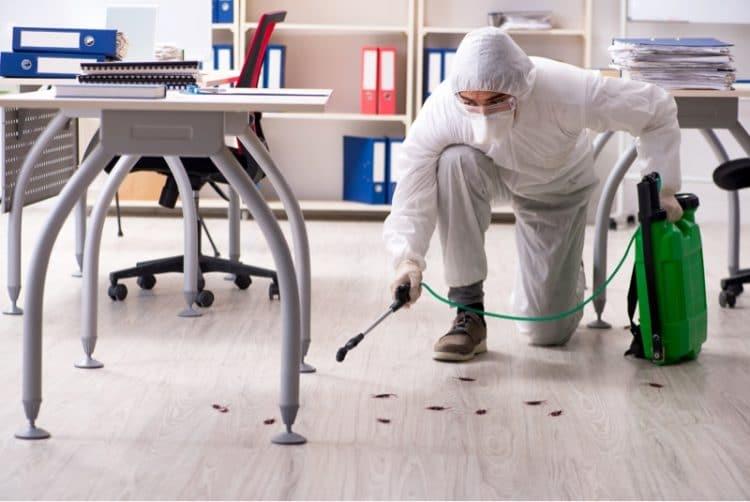 pest control services brixton