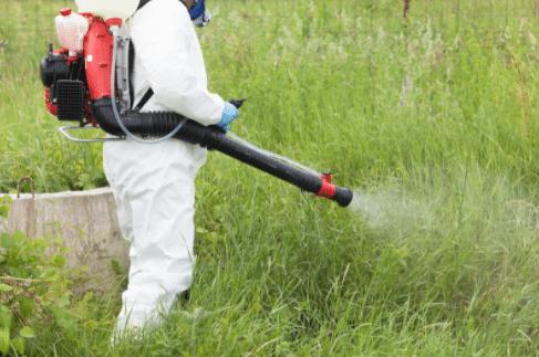 Pest Control Euston