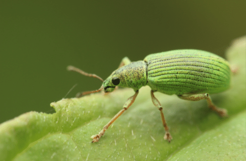 Insect Problems due to Weather Conditions